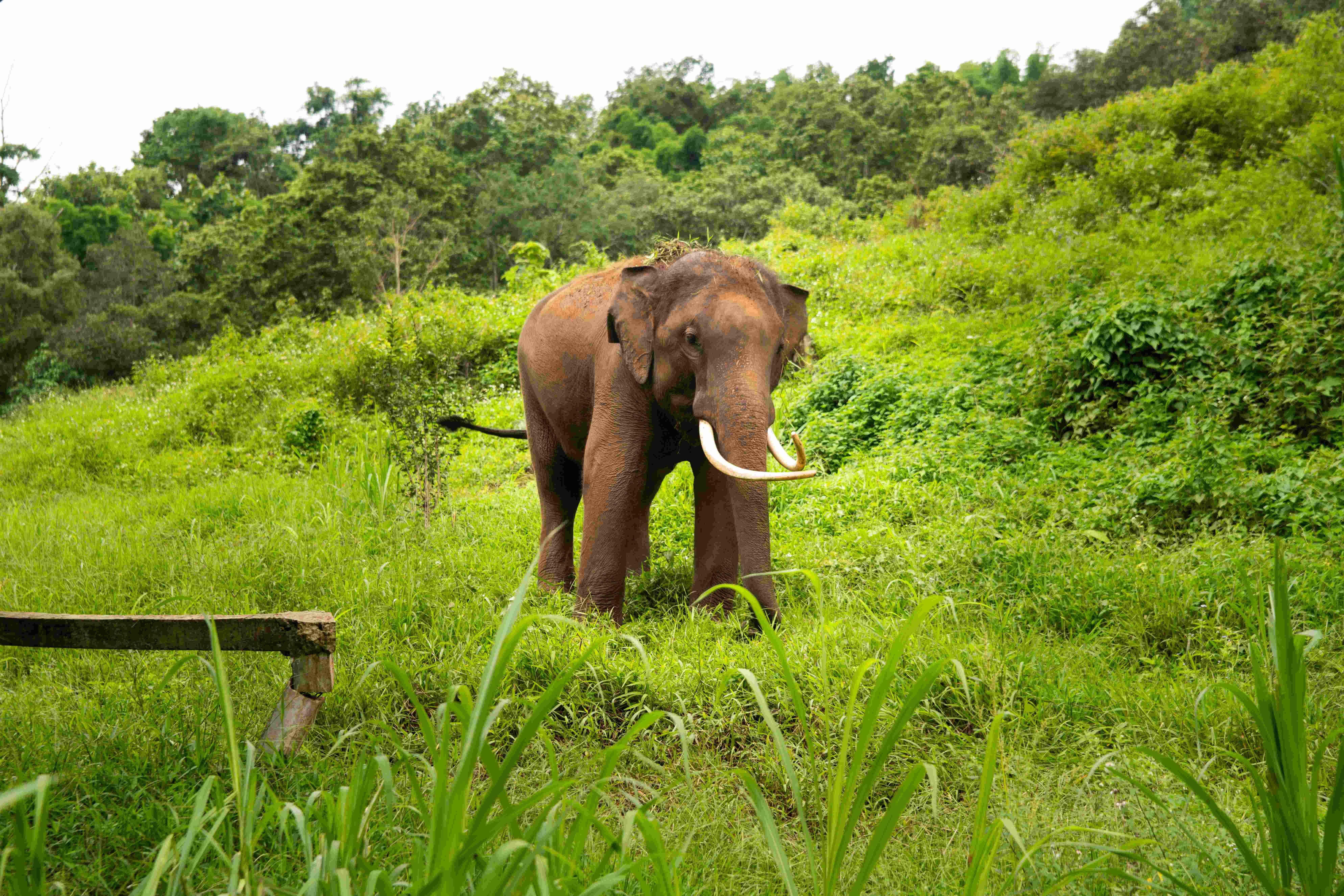 Thailand-576.jpg